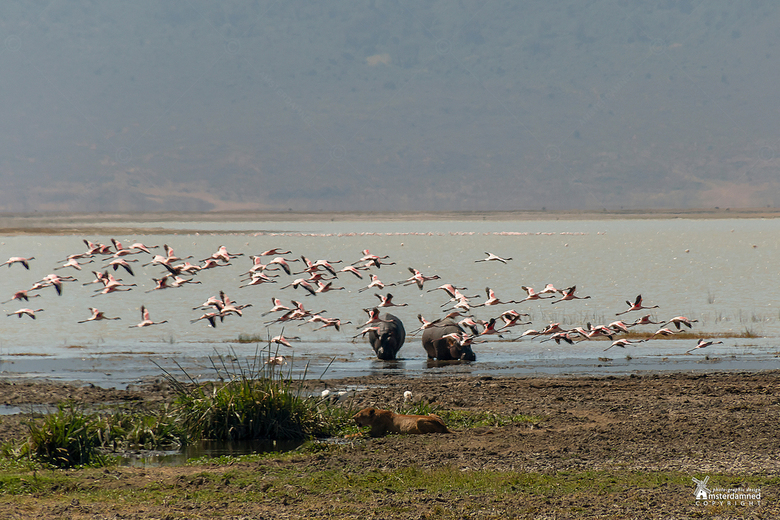 Ngorongoro Crater in Tanzania - Soms zou je wensen dat je dingen beter kan zien , maar ja ... je bent op safari en niet alles komt op bestelling dicht