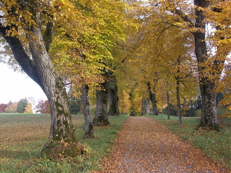 Herfst - Bedankt voor jullie reacties op mijn vorige upload. <br /> Iedereen een fijne herfst toegewenst!
