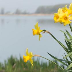 Voorjaar in het Twiske
