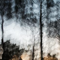 bos (1 van 1)