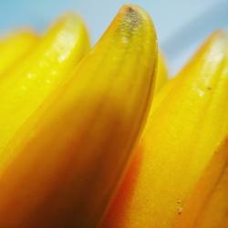 bloem of banaan?