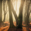 Goud licht in het bos