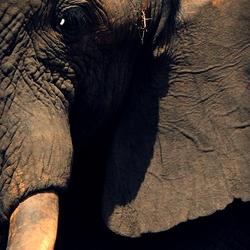 Wat een imponerende beesten zijn het toch!