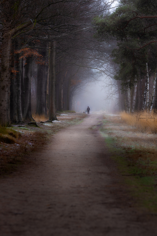 Walking the dog -