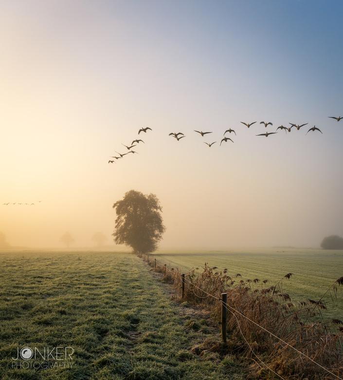 Unexpected company - Op het moment dat ik de foto wilde maken kwamen er ineens een groep ganzen over vliegen. Een aangename verrassing!