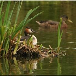 Op het nest ....