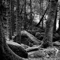 bos zwartwit