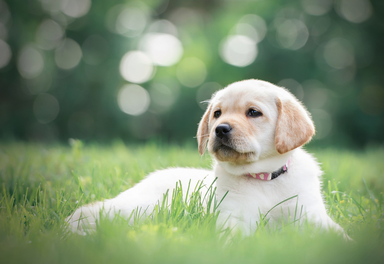 puppyfeest...
