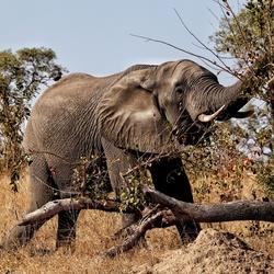 Mister Elephant