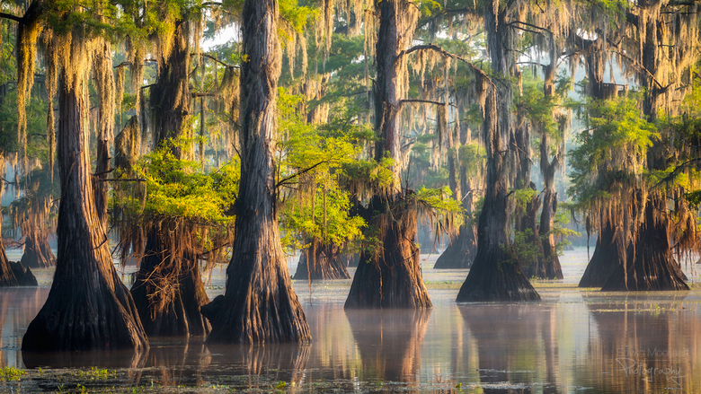 Caddo Lake Zonsopkomst