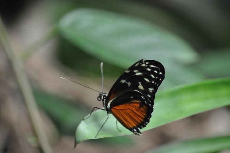 """Butterfly - Vlinder op een blad <img  src=""""/images/smileys/smile.png""""/>"""