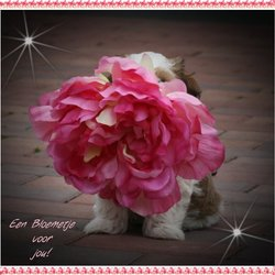 een bloem voor jou