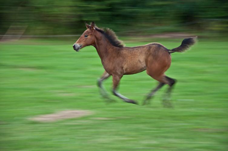 Puur snelheid en kracht - Jong veulentje. Ging er ineens vandoor. Ze is echt pijlsnel en bijna niet te volgen.