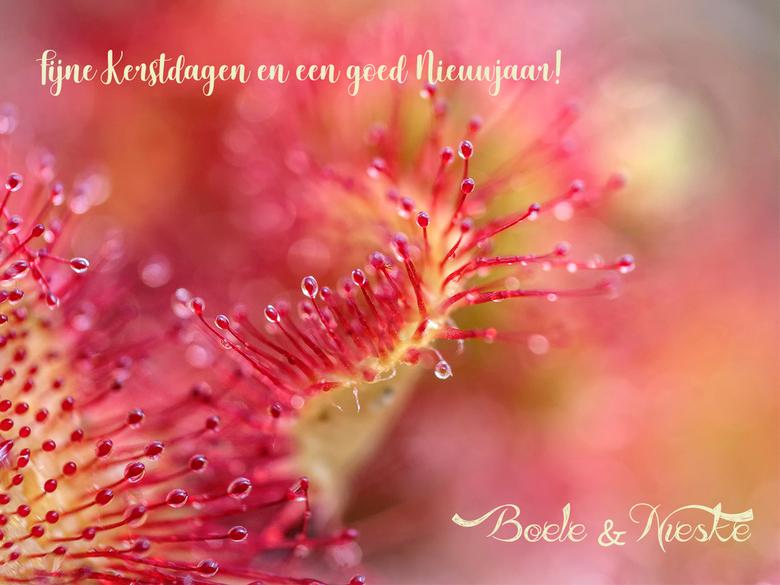 Tot het volgend.... - jaar...fijne dagen gewenst in deze bijzondere tijd! maak er wat moois van! blijf gezond!