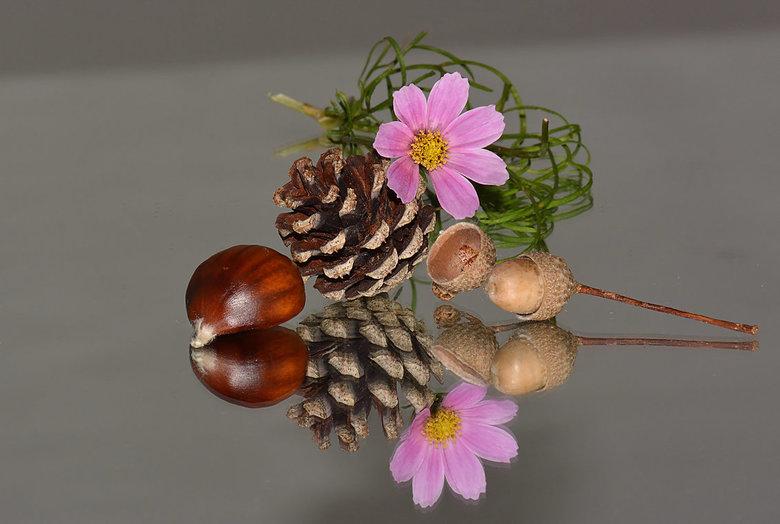 Producten van de herfst. -