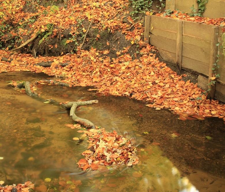 little stream - deze foto heb ik gemaakt in het straverdenbos <br />