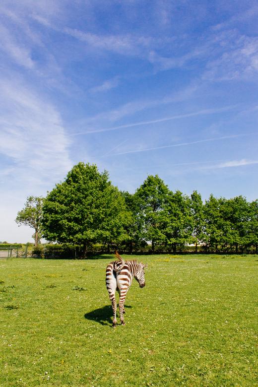 UNEXPECTED - Deze foto heb ik genomen vlakbij mijn dorp in Nederland overigens. Omdat ik ben afgestuurd is deze foto voor mijn eindexpositie op het Gr