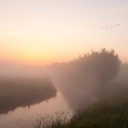 Biesbosch in de ochtend