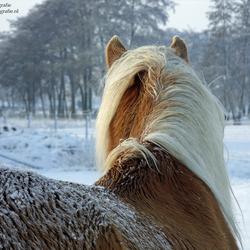 Wintertijd voor een paard...