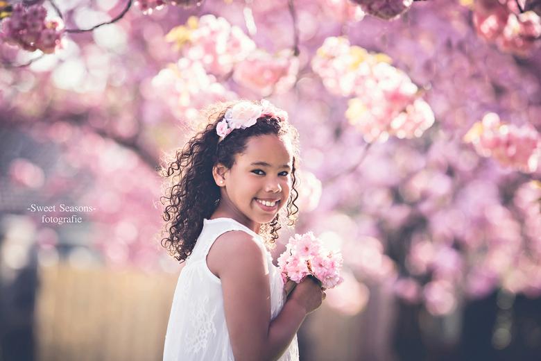 roze bloesem -