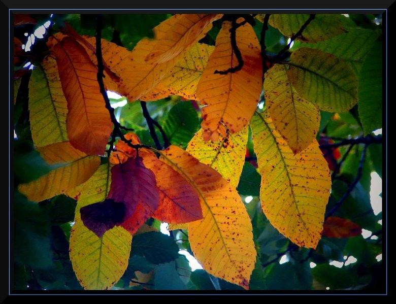 Herfstbladeren - De kleuren van de herfst