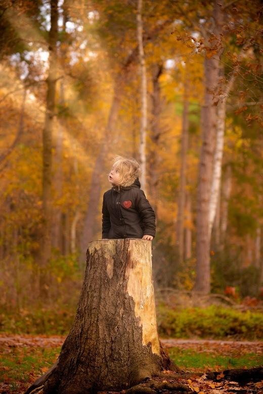 Herfst in het bos - Herfst in het bos