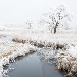 Winterlandschap Giethoorn