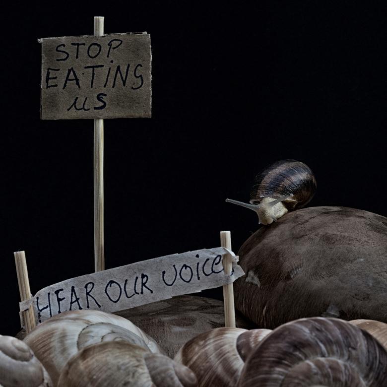 stop eating us - Wat als.... Steeds vaker stel ik deze vraag als ik weer een slak door mijn tuin zie kruipen. <br /> Ik dook dieper in de wereld van