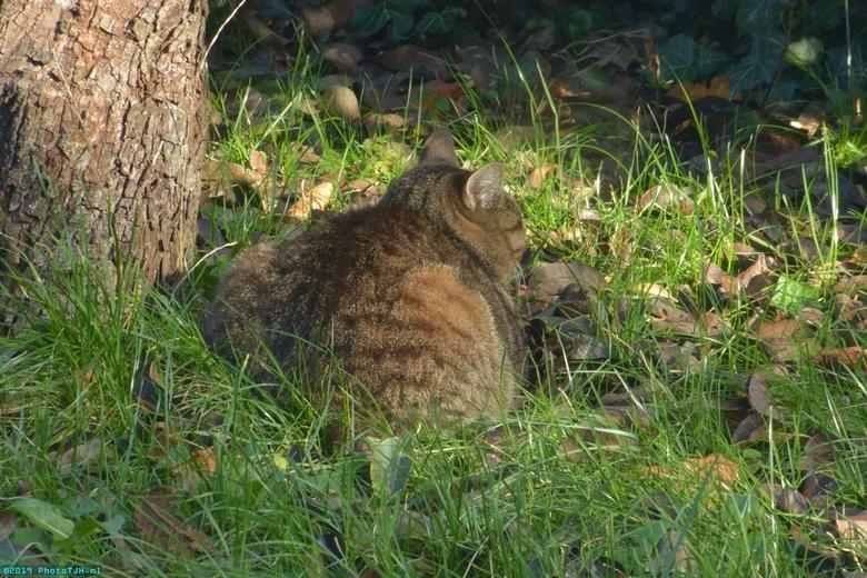 Neelix in de tuin. - Neelix de kater in de tuin, genietend van het zonnetje.