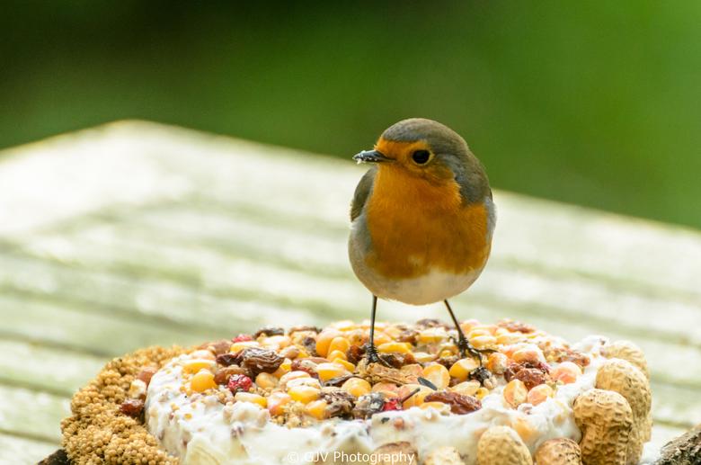 Taart! - Gisteren heb ik een vogeltaart op de tuintafel gezet. Deze viel meteen in de smaak bij de roodborstjes. Deze foto heb ik door het keukenraam