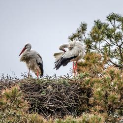 Samen op het nest