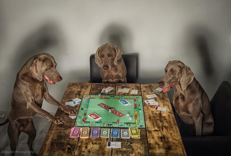 Lets play buddies!!! - 3 weimaraners aan de tafel...<br /> Was idd een mooie uitdaging