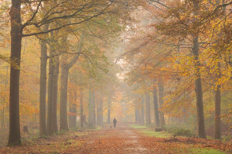 Herfst 2019 - Een opname van vorig jaar toen de dag begon met nevel en de zon er maar moeilijk door wist te komen