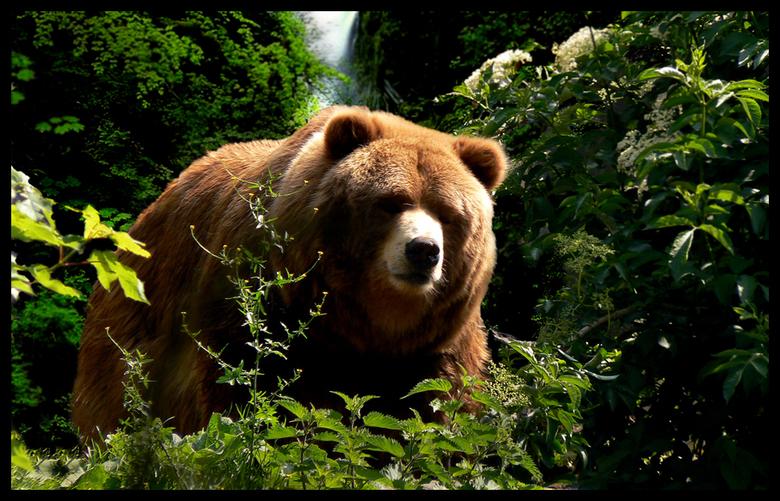 """Bear - Vraag maar niet waar ik deze heb genomen <img  src=""""/images/smileys/wilt.png""""/>"""