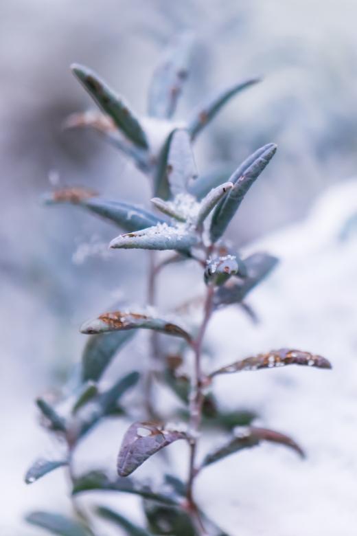 Sneeuw 2021 - De eerste sneeuw van het jaar kunnen vastleggen.