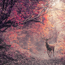 The red deer in the red forest