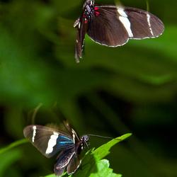 Vrolijk verliefde vlinders
