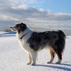 Aura in de sneeuw