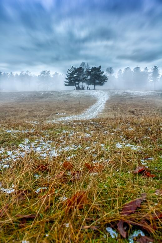 mistig bos op de vroege ochtend - een mistig bos op de vroege morgen in het bos van dorst