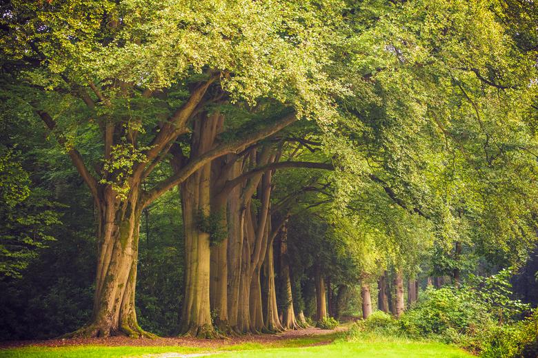 Landgoed Bantam - 's-Graveland is een kleine plaats nabij Hilversum met historische landgoederen. De bomenrij is de mooiste van dit gebied. De we