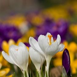 Genieten van het eerste lente zonnetje..