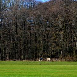 Wezep Landscape