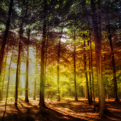 colour the forest