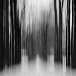 Bewegende bomen in perspectief