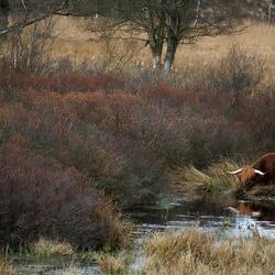 Wildlife in Drenthe