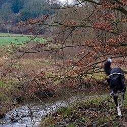 Limburgse heuvelland met Bo