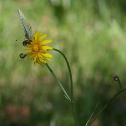 flower by tirsje