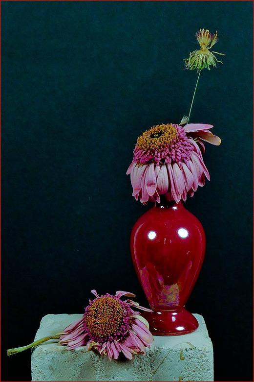 spelen met bloemen............