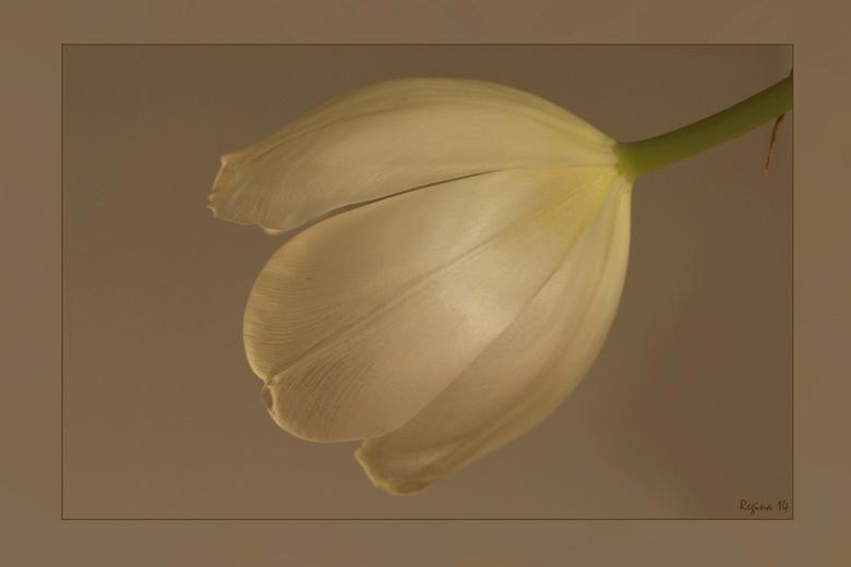 zacht - Tulp met als achtergrond een deur, vond het zelf een mooi zacht effect, gemaakt door Regina.<br /> <br /> gr Edwin en Regina
