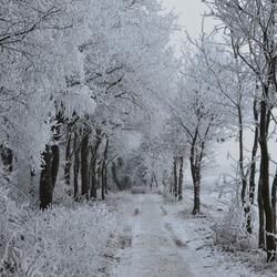 Winter in Sellingen